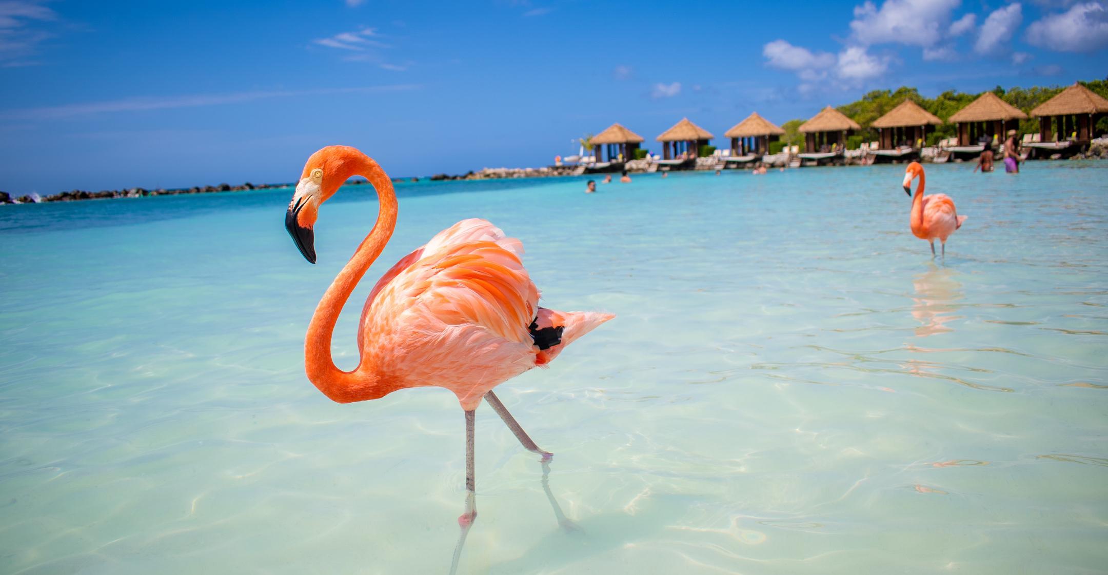 arubas honeymoon first sweepstakes free trip one couple postponed wedding pandemic
