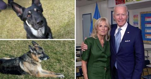 jill biden joe biden dogs settled white house mh